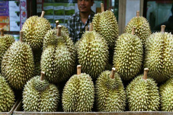 durian-CNN - durian