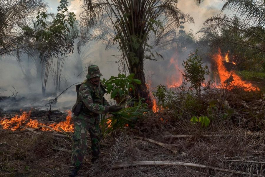 There Will Be No New Palm Oil Plantations in Indonesia