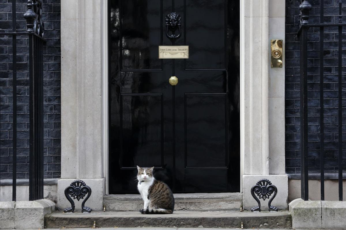 This Cat is 10 Downing Street's Most Popular Influencer