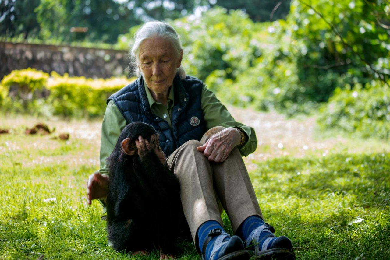 Jane Goodall Shares How To Restore The Planet
