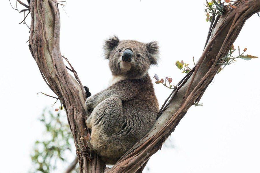 Heroic Tales of Animal Rescue From Australia's Bushfires